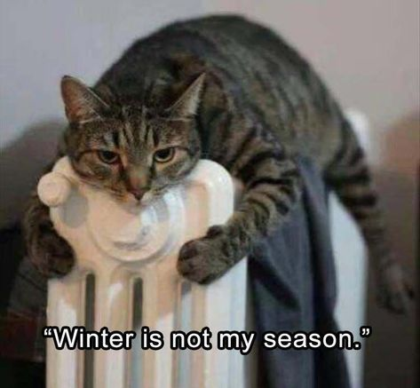 Funny Animal Picture Dump The Day 24 Pics Cats