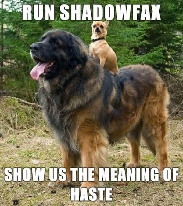 Download the Awesome Funny Dog Innuendo Memes