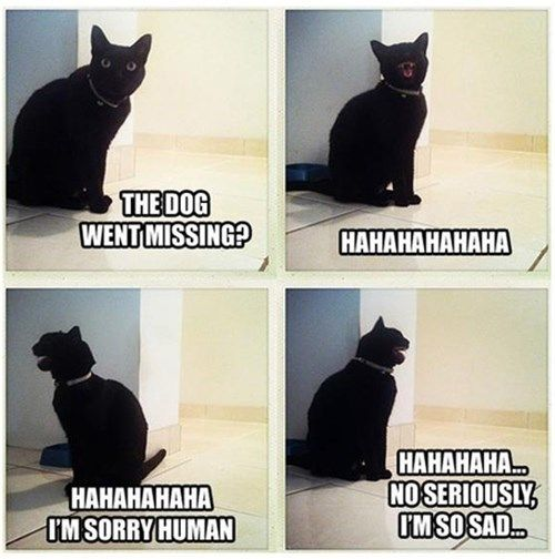 dogs laughing Cats sarcasm