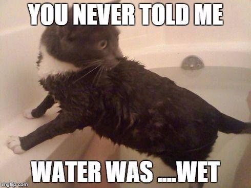 My cat s first bath