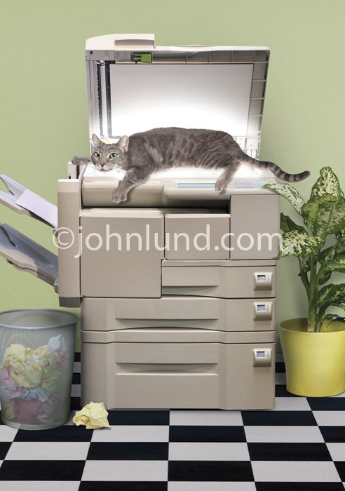 Copy Cat on a copy machine