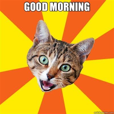 GOOD MORNING GOOD MORNING Bad Advice Cat