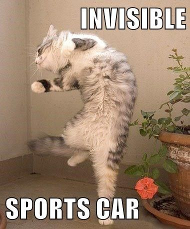 Funny cat meme of a cat that looks like he is driving an invisible sports car