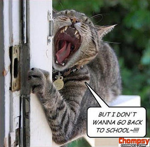 funny cat doesnt want to go back to school