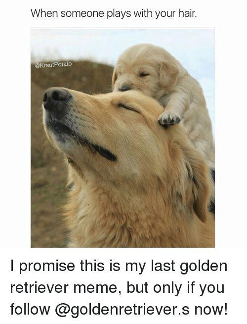 funny dog · Golden Retriever Meme