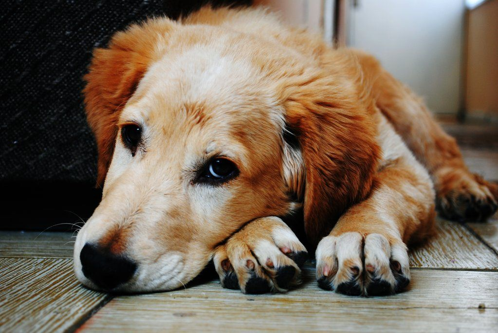 3 Reasons Why Milk Bones Are Unhealthy for Your Dog