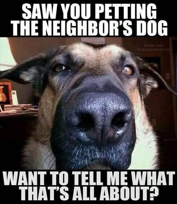 Luxury Dog Memescute Animal Memes What S That All About Beautiful Animals Pinterestcute Animal Memes