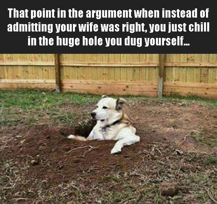 Download the Beautiful Funny Pictures with Captions Dog