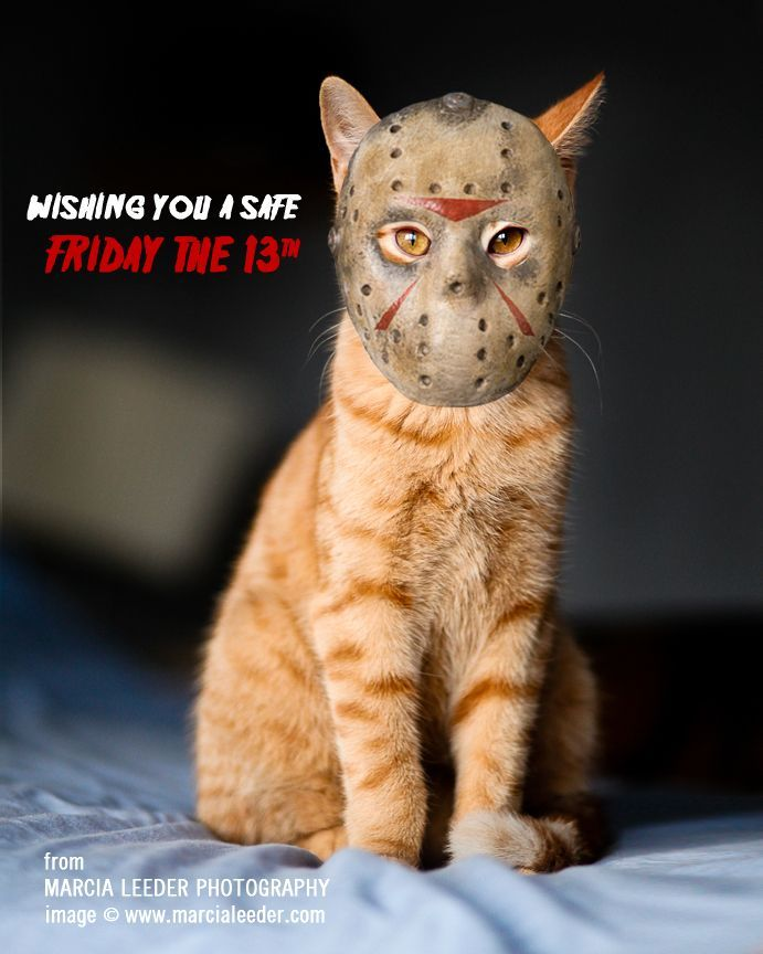 Download the Beautiful Happy Friday the 13th Funny Cat Pictures