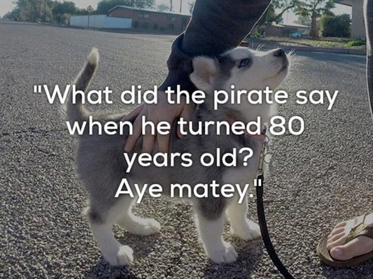 Really Bad e Liner Jokes Are Funnier With Dogs 24 Pics