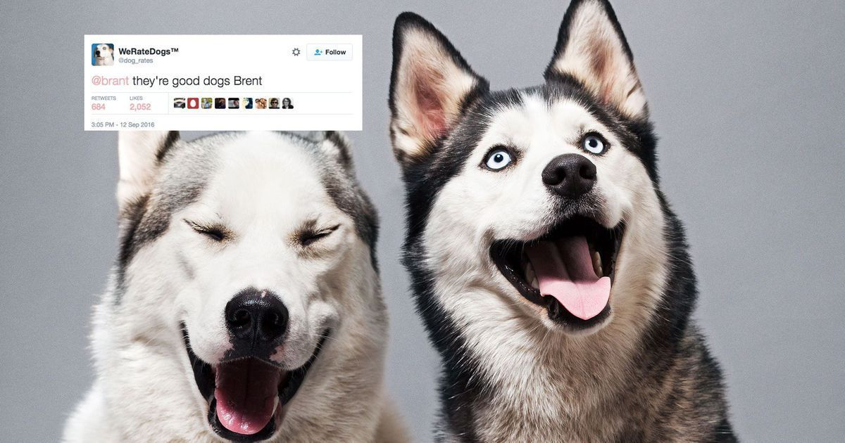Dog loving Twitter account perfectly shuts down troll because all