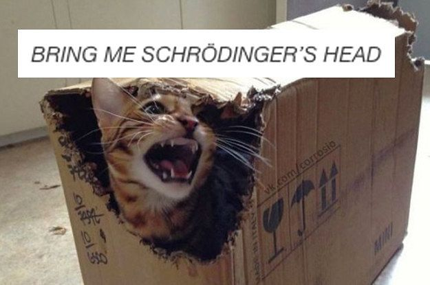 23 fucking funny tumblr posts about cats 2 0 dblbig