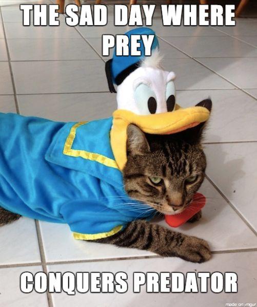 10 Funny Halloween Cat Costume Memes