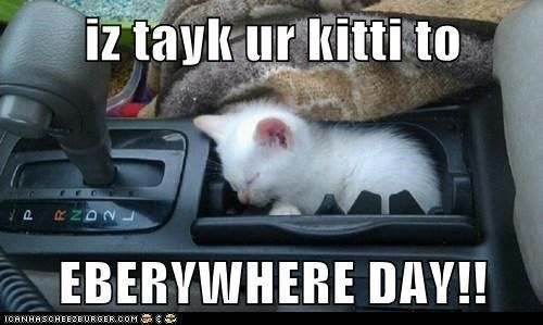 captions car Cats cupholder drive kitten take your child to work d take your child to