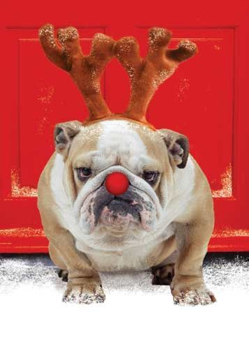 Download the Best Of Funny Dog Christmas Pictures for Mom
