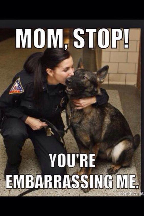 These Amusing Random Dog Memes Will Lighten Up Your Mood bemethis