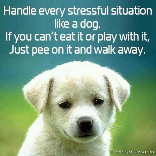 Baby Animals Funny Animals Funniest Animals Animal Babies Funny Stress