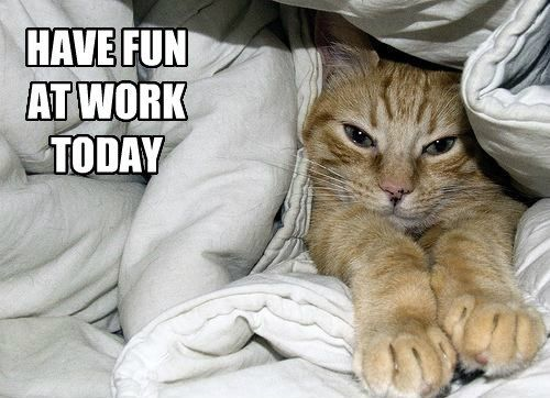 Download the Best Of Funny Rude Cat Pictures