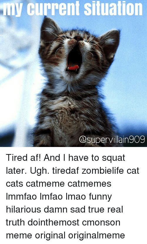 Cats Funny and Lmao current situation GDsupervillain909 Tired af And I have