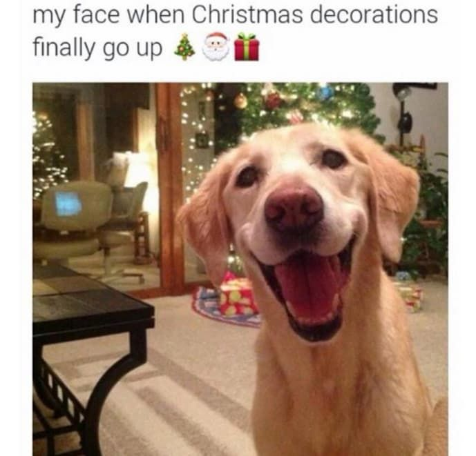 21 Dog Memes That Will Cure Your Bad DayThis dog s expression that captures the excitement of