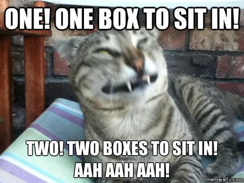 Funny Cat Memes Tumblr 6 Funny and Funny