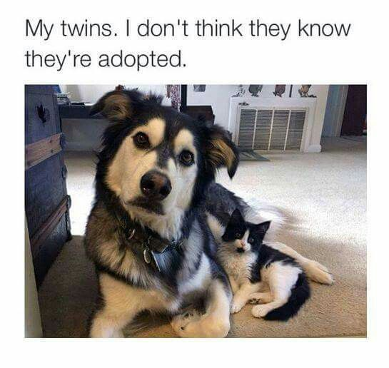 Aww Xx Funny Family Jokes Funny Memes For Kids Funny Jokes Funny Animal