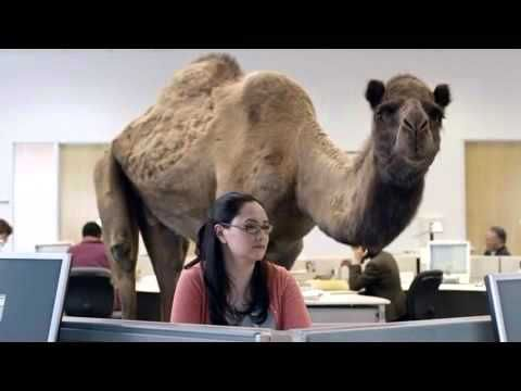 GEICO Hump Day Camel mercial Happier than a Camel on Wednesday