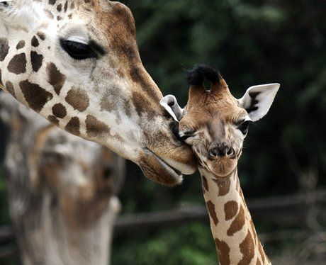 mothers and their young animals