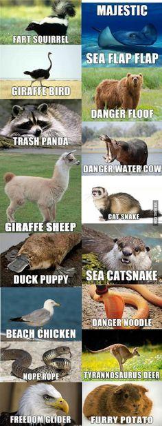 If I had to name some animals animaljokes