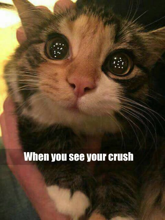 funny cat memes cute kitty big eyes when you see your crush