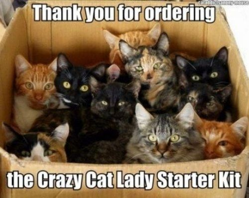 11 Best Pics of the Crazy Cat Lady Meme