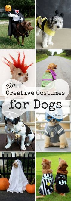 25 Creative Costumes for Dogs