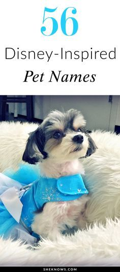 56 Disney inspired names for your dog or cat Pet Names For Dogs