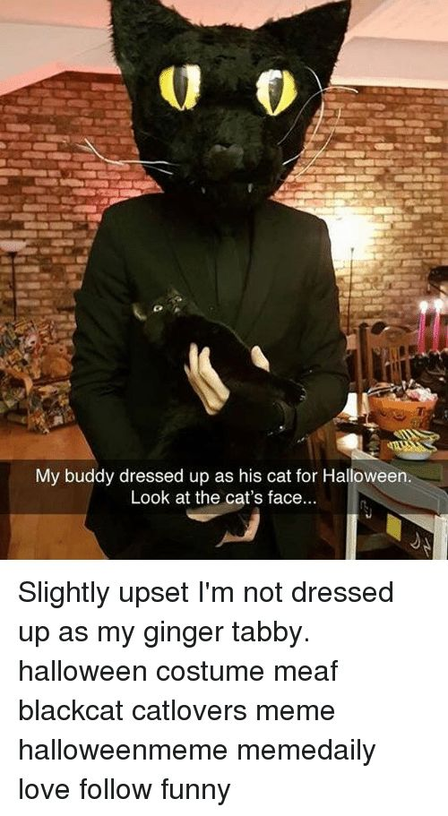 Halloween Memes and Dress My buddy dressed up as his cat for Halloween