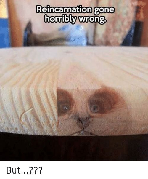 Grumpy Cat Reincarnation and Wrongs Reincarnation gone horribly wrong But