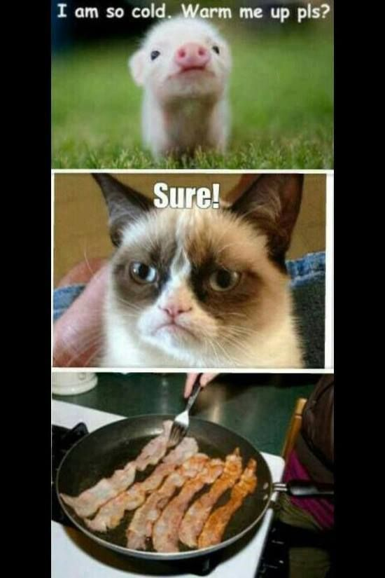 Grumpy cat quotes grouchy quotes grumpy cat jokes grumpy cat humor grumpy cat pictures …For the best humor pics and memes funny visit