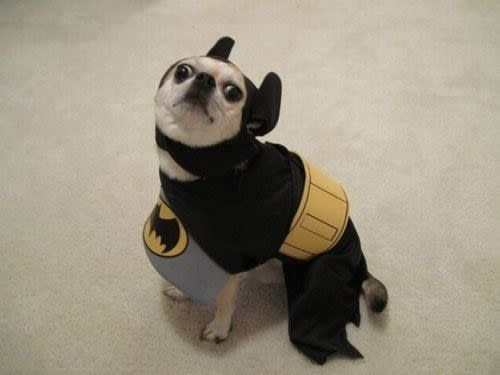 This dog s attempt at being a hero