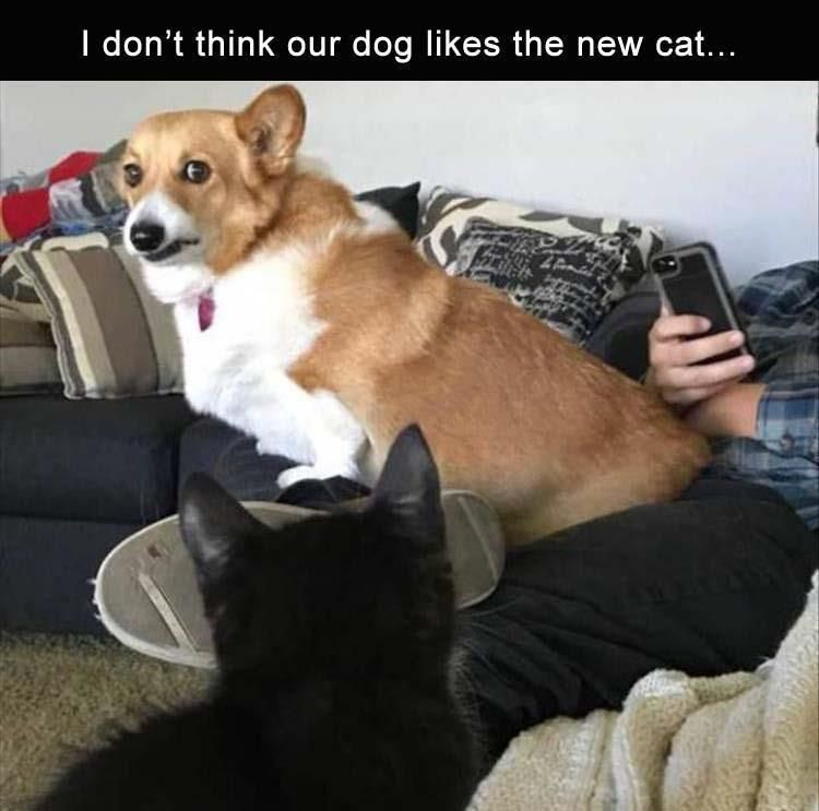 Funny Animal 22 Pics Funny Pets Funny Dog Memes Funny Pranks Funny