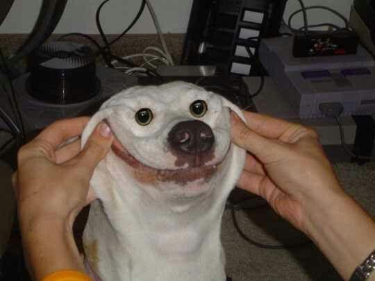 Beady eyes Funny Animal Memes Funny Dogs Funny Memes Funny Dog Faces