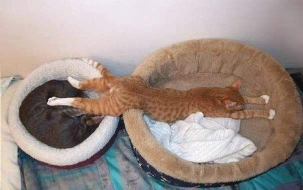 Funny Cat Beds You May Own A Dog But A Cat Owns You Pics Uncontrollable Crazy Cats That Defy All Logic Funny Cat Bedtime