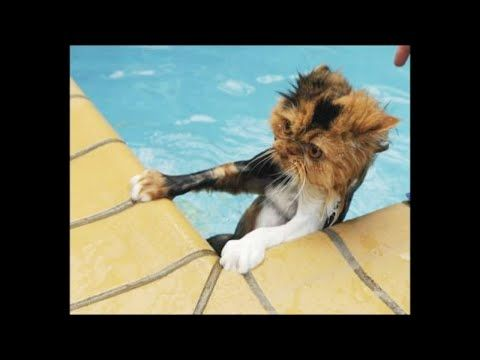Funny cats falling into water