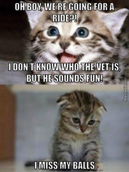 Veterinarian Memes Funny CatMemes