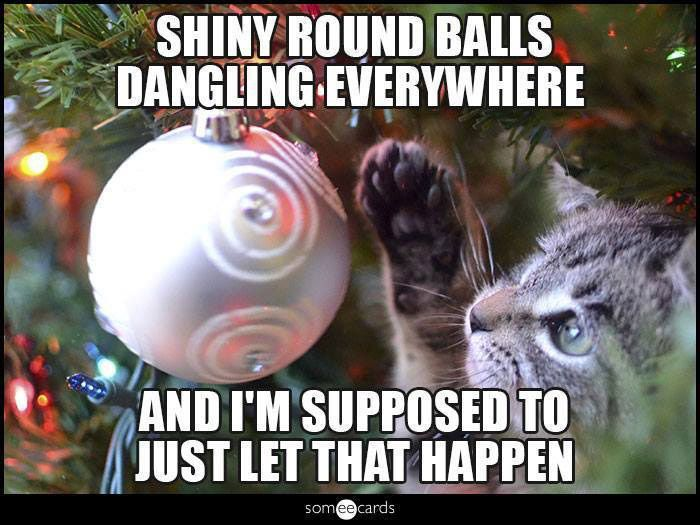 What s a Kitty to Do at Christmas