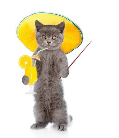 Funny cat with summer hat holds tropic cocktail and pointing stick isolated on white background