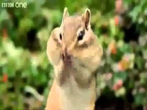 Funny Animals with voice over