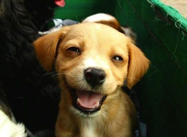 16 Happy Puppies Guaranteed To Put A Smile Your Face 0