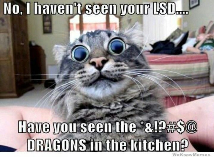 21 Funny and Silly Cat Memes