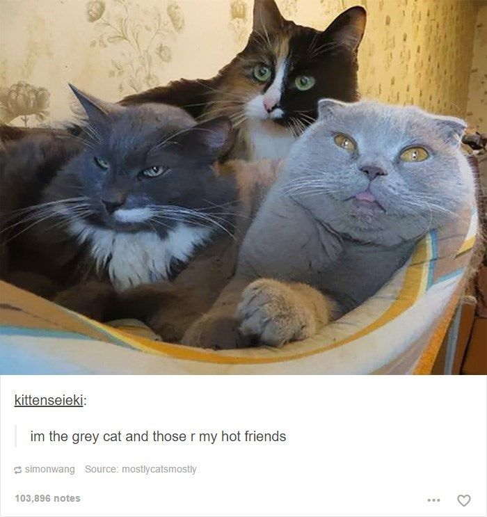 3 I am the grey cat and those are my friends Via tumblr