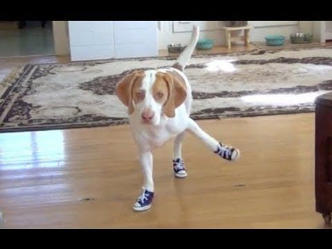 Funny Dogs in Boots 2014 [NEW HD]