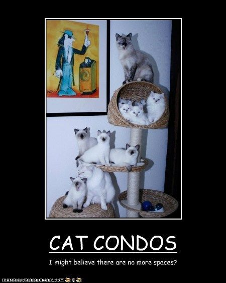 Download the Fresh Funny Cat On Box Next to Cat Condo Pictures